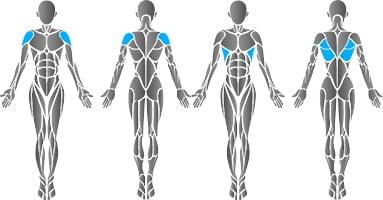 mięśnie najszersze grzbietu