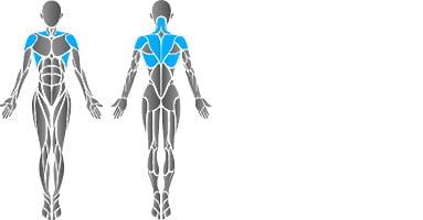 partie mięśni pleców